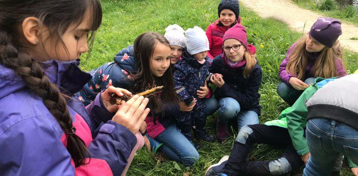 Würm AG aus Untermenzing im Urwald von Obermenzing