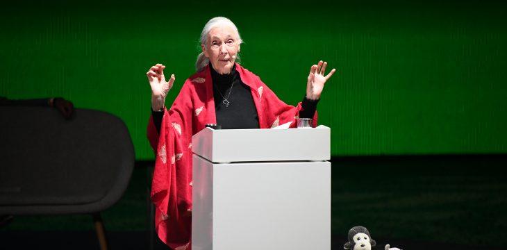 """Eindrücke vom Abend mit Jane Goodall im """"Showroom"""" – und mit 1500 Menschen"""