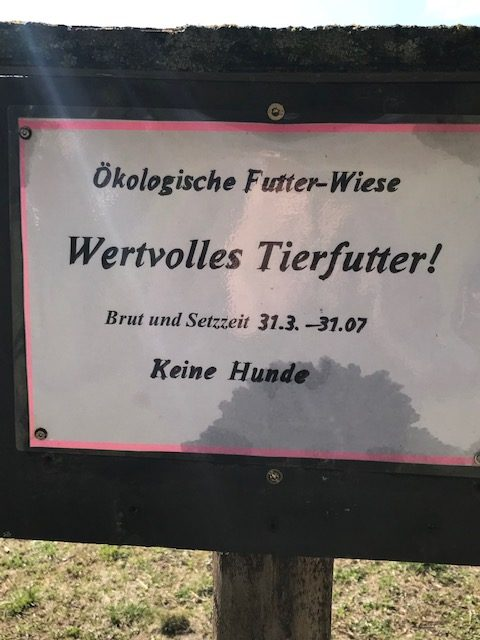 Die Ausgleichsfläche in Obermenzing – ab jetzt wär's angebracht, evtl. mit Hundefreunden ins Gespräch zu kommen...