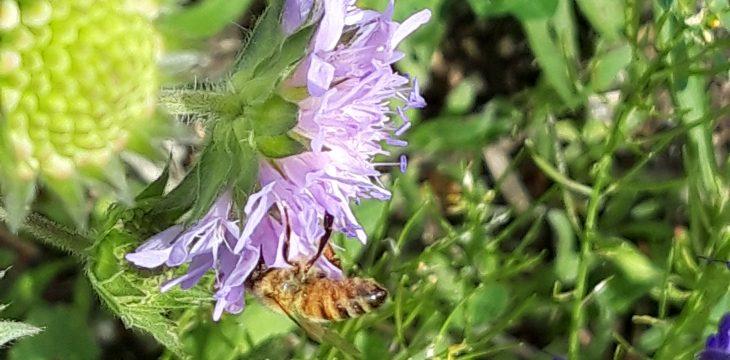 Frühlingstag an der Insektenoase Allach