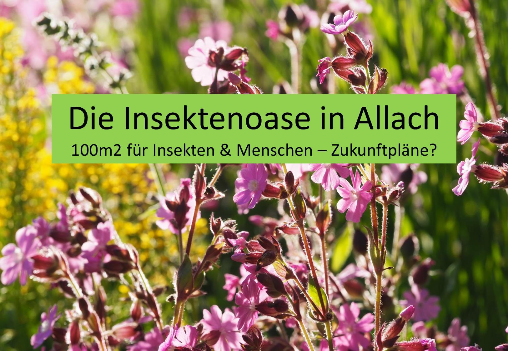 Vorschlag Insektenoase Gartenbau-Seite 2-001