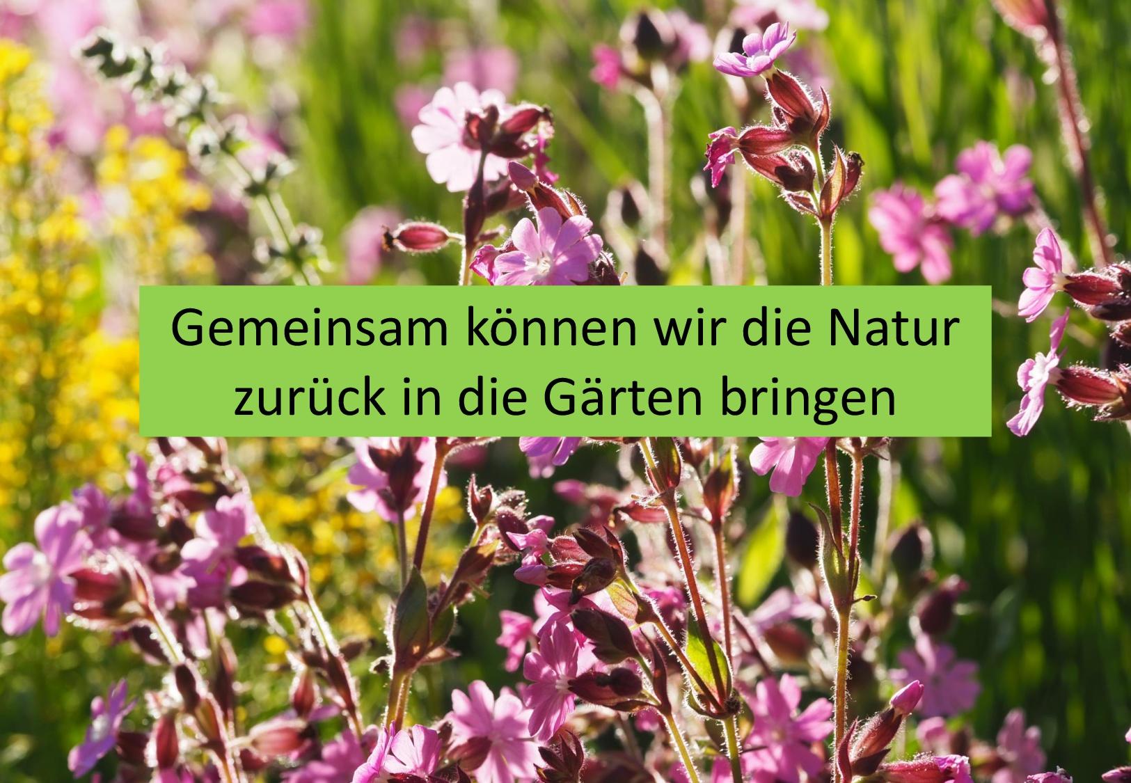 Vorschlag Insektenoase Gartenbau-Seite 2-008